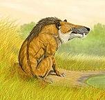 La Bête du Gévaudan, un animal sauvage ?
